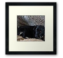 JADE 2ND..I have to laugh looking at his expression..lol Framed Print