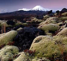 Mountain Mosses by Michael Treloar