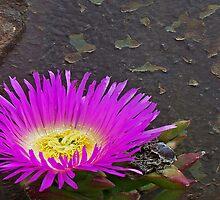 Bloom on Turret by LynnL