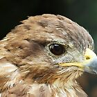 Common Buzzard (Butao Butao) by JanSmithPics