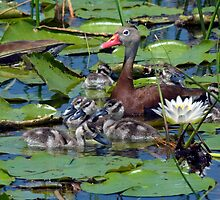 Whistling -Duck Family by PaulWilkinson