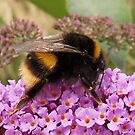 Bumble Bee Moment by sarnia2