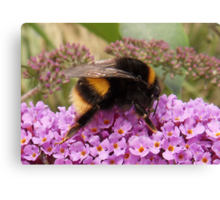 Bumble Bee Moment Canvas Print