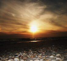 Seashells.... by Tgarlick