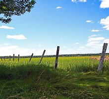 Old FencePosts - The Marsh at Pine Point by T.J. Martin