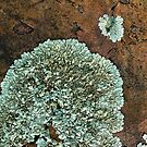Lichen on Quartzite II by hastypudding