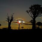 living and dead quiver trees in the setting Namibian sun by mamba