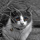 Kitty Kat by blueyesdragon