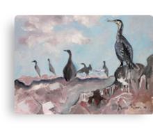 Cape Cormorants Canvas Print