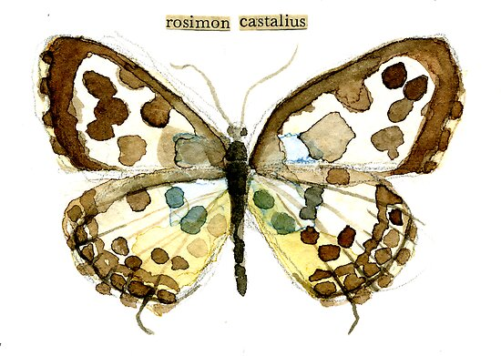 Castalius rosimon (Common Pierrot Butterfly) by Carol Kroll