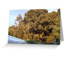 Golden Oak with the sun going down in the next garden ove Greeting Card