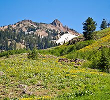 Lassen in Bloom by Bob Moore