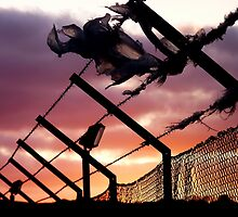 barb wire sunset by warnoisecabaret