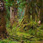 Hoh Rain Forest by RavenFalls