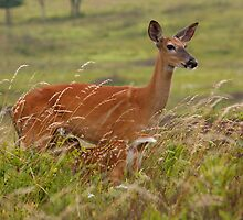 Whitetail Doe with Fawn Nursing by Joe Elliott