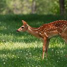 Whitetail Deer Fawn by Joe Elliott
