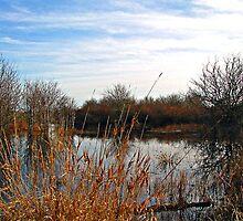 ~ Wetlands ~ by Brenda Boisvert