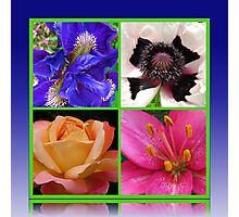 Peace Rose, Ruffled Poppy, Iris and Lily Collage Photographic Print