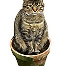 Potted Cat by Brian Roscorla