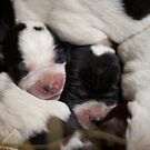 Puppy Pile Up by Jodi Turner