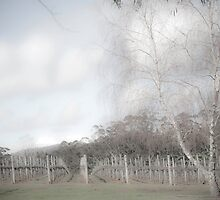Winter vineyard 2 by pennyswork