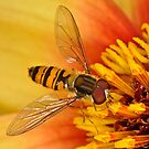 Pollination 4 by Gareth Jones