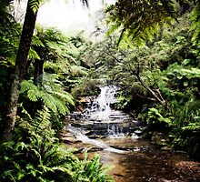 Leura Cascades - Blue Mountains by PolkadotPhotos