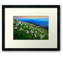 Flower Avalanche Framed Print