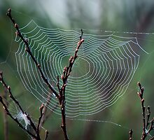 Spiders Web by Laura Sanders