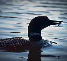 Loon with Fish by Laura Sanders