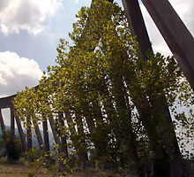 Tree at the Base of the Cooling Tower - Phipps Bend, Tennessee by rachaelevelyn