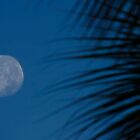 Misshapen Moon......... by Brenda Dow