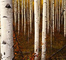 Kebler Aspen by Alex Burke