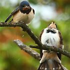 Swallow in the rain at Cosgrove by JanSmithPics