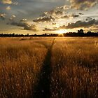 Harborough Hay field at sunset by DavidKennard