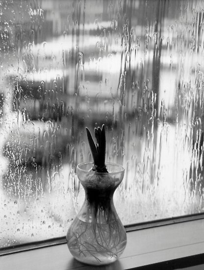 rainy window by Marianna Tankelevich