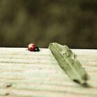 Ladybird. by Marc Bruno Schroth