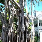 Banyon Tree in Key West by John Carpenter