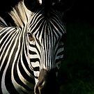 Portrait of Burchell's Zebra by Scotch Macaskill