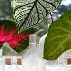 Three Leafs and Bottles by Jay Reed