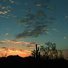 Cactus Sunset by Nilah M.