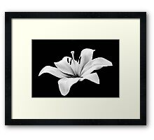 White lily - monochrome Framed Print