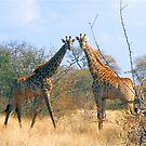 WHEN TWO FRIENDS MEET - the giraffe by Magaret Meintjes