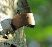peeling birch bark by Leeanne Middleton