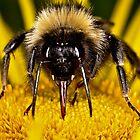 Bee face to face by Gareth Jones