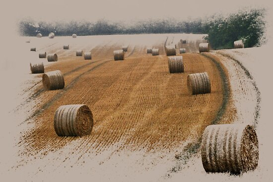 Harvest 2010 by ©FoxfireGallery / FloorOne Photography