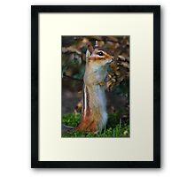 Standing Tall - Eastern Chipmunk Framed Print