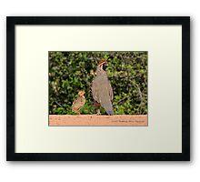 Gambel's Quail (Male) & Chick Framed Print