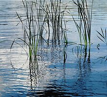 Reed Reflections #1 by kenspics