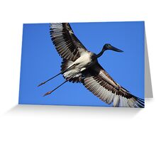 Jabiru Flight Greeting Card